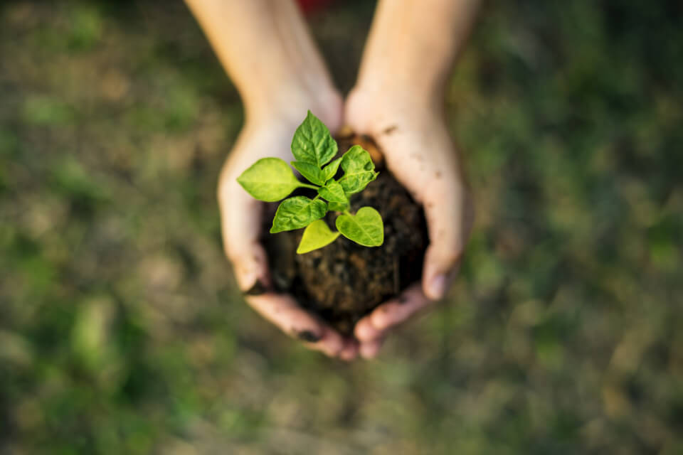 viterma Nachhaltigkeit